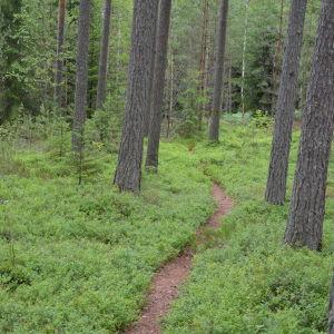 Stig genom skog och blåbärsris i Dalsbruk.