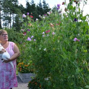Susanne Gustafsson håller i hunden Hugo bredvid blommande luktärter.