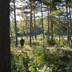 En man går i skogen.