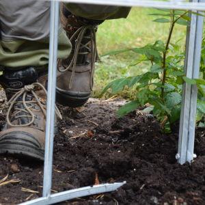 Lukrad och fuktig mylla är en viktigt del av en lyckad trädgård.