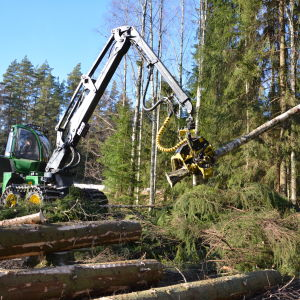 Skogsmaskin fäller träd.
