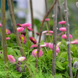 Små rosa blommor i ett blomsterarrangemang med videkvistar.