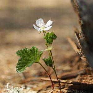 Hilla kukkii
