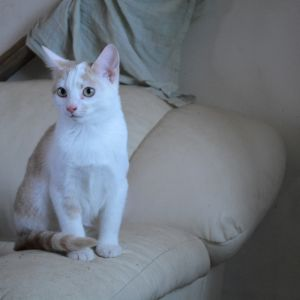 vit katt i soffa