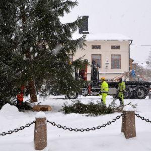 Omkom vid avverkning av julgranar