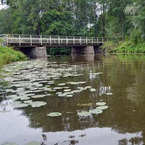En å där det växer näckrosor. I bakgrunden syns en bro som går över ån.