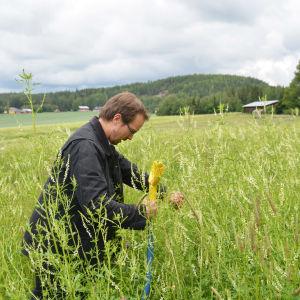 Tuomas mattila gräver i en åker med vallväxter.