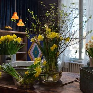 Ett bord med olika narcisser och påskris i vaser och krukor.