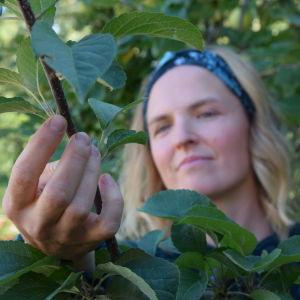 Lena Gillberg håller i en äppelträds kvist