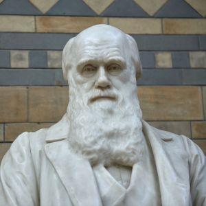 En staty av evolutionsteorins utvecklare, Charles Darwin, på det Naturhistoriska museet i London.