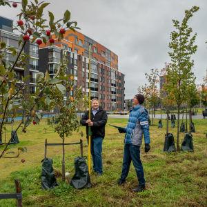 Priit Tammeorg, Kasvinviljelytieteen yliopistonlehtori, Helsingin yliopisto sekä Esko Salo,  tutkija, VTT, mittaamassa biohiilipuiston puuta.