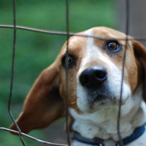 Hunden Rolle vakar över gamla arbetarbastun i Dalsbruk