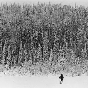 Mies hiihtää lumihangessa. Edessä aukeaa korkea luminen metsä.