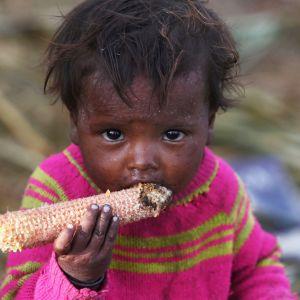 Barn äter majskolv i Srinagar i indiska Kashmir.