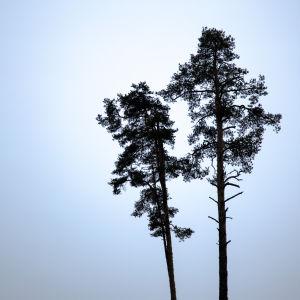 bild på två träd