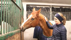 Lia Lundström och hennes häst i ett stall. Hästen nosar på en annan häst.