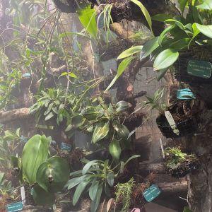 Tropiska orkidéer i ett växthus. De omges av ett lätt dis skapat av luftfuktare.