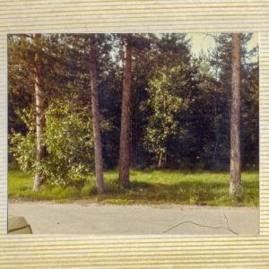 Vanha 1980-luvun albumivalokuva, jossa nurmikonreunassa koivuja ja mäntyjä ja kuvan vasemmassa alalaidassa vähän autoa.
