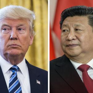 Porträtt på Donald Trump och Xi Jinping