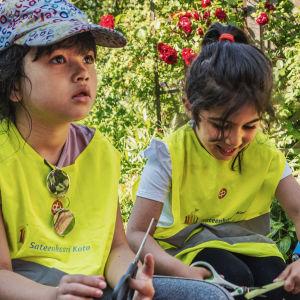 Två mörkhåriga flickor iklädda neongula västar sitter på varsin pall i en trädgård och klipper rabarberstjälkar med sax.
