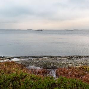 Klippor och du ser över ett dimmigt och grått hav. Ljung växer i förgrunden.