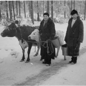 Pakolaisia Pyhäjärveltä. Räisälä. 16-12-39.