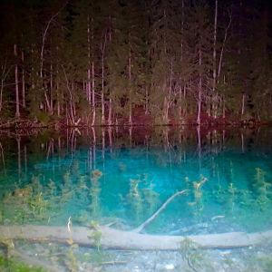 Kirkasvetisen lähdelammen pinnan läpi erottuu selvästi suuri puunrunko ja vihreää vesikasvustoa.