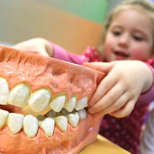 Barn inspekterar en modell av människans tänder.