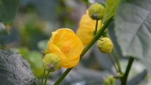 En gul blomma