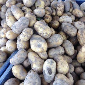 Potatis till salu