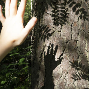 Minä ja mun puu.