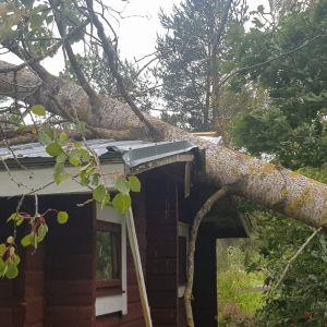 Ett träd ligger över ett hus.