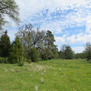 Hagmark som kantas av skog.