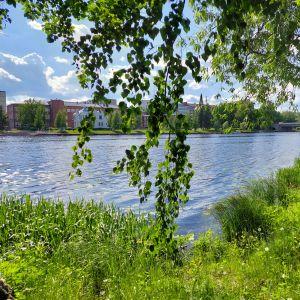 Hämeenlinnassa Vanajavedessä on vesi korkealla.
