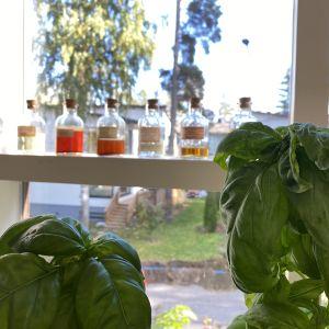 två basilikaväxter i förgrunden, i bakgrunden gamla medicinflaskor i ett fönster.