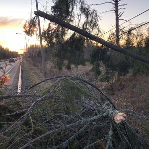 Myrskyn sähkölinjalle kaatama puu viitostien varressa Leppävirralla
