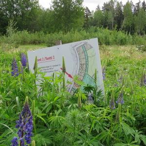 En tomt med högt gräs och lupiner. I mitten en skylt som berättar att det är fråga om tomt 2 på Västersvängen i Ingå.