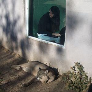 to nightwish with love -dokumentti, argentiinalainen Andrea Schnidrig, fani, tuomas-puuma, eläinreservaatti, argentiina