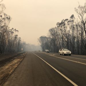 Ödelagd skog vid sidan av en landsväg i Victoria, Australien.