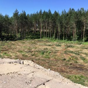 Avverkad skog, spår av skogsmaskin syns. Sommar, sol.
