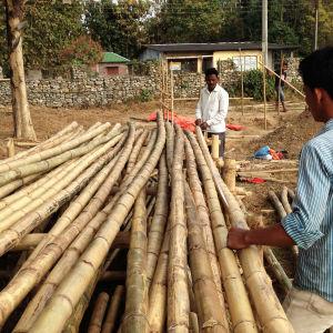 Bambujen mittausta
