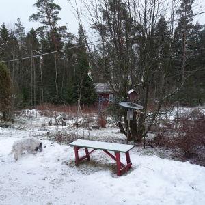 Fågelbordet hemma hos Marianne Tapper i Västanfjärd