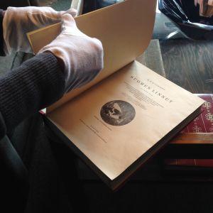 Sibeliuksen lintukirjoja Ainolasta