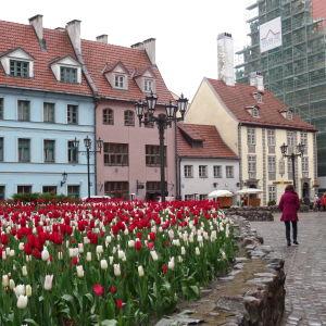 Gatuvy i gamla stan i Riga