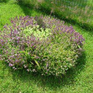 en rund rabatt med örter och blommor