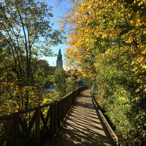 Höstbild med vy mot Åbo domkyrka.