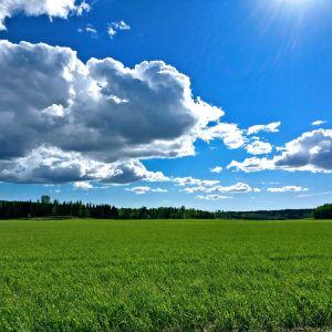 Sädesfält och cumulusmoln, försommar