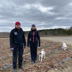 Laitiset seisovat mansikkapellolla, koirat Ella ja Tici hääräävät ympärillä.