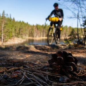 En kotte på marken, och i bakgrunden en terrängcyklist.