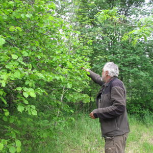 Dick Forsman undersöker blad i sin trädgård.